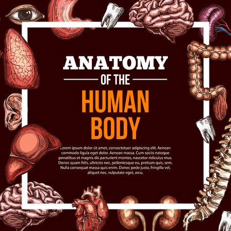 인간의 장기 벡터 스케치 해부학 포스터 일러스트