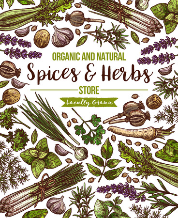 Vector spices and herbs herbal store poster