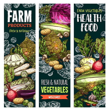 Vector sketch banners of natural farm vegetables Stok Fotoğraf - 95329949