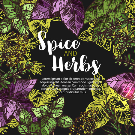 Spices and herbs farm store vector poster