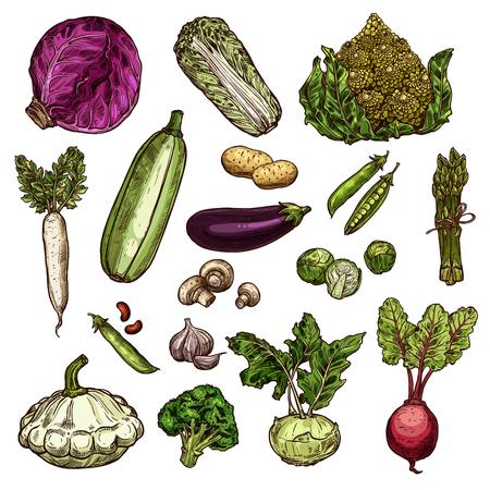 Set of vegetable icons Illustration