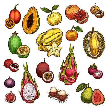 Set of ripe exotic fruits isolated on plain background. Illustration