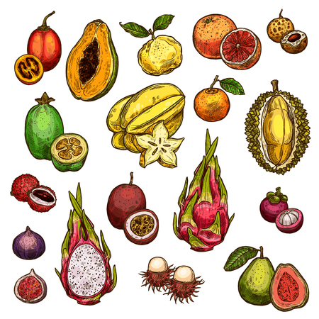Set of ripe exotic fruits isolated on plain background. Çizim
