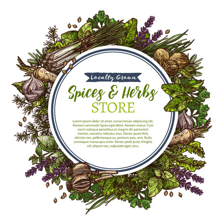 Spices and herbs farm store vector sketch poster illustration.