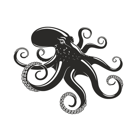 Octopus vector ocean seafood mollusc icon illustration.