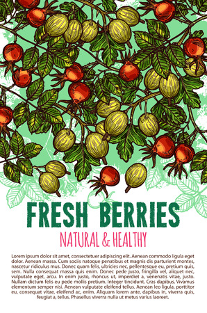 Fresh berries vector sketch poster illustration.