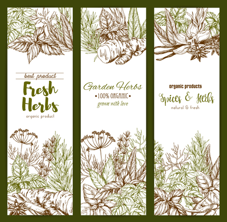 Spices and herbs farm store vector sketch banners illustration.
