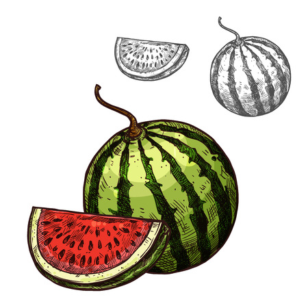 Watermelon vector sketch fruit cut section icon illustration.