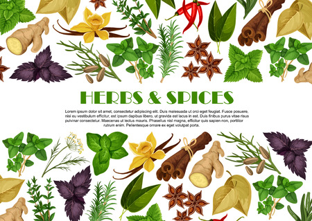 Spices and herbs farm store vector poster design illustration.