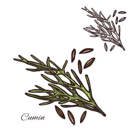 Cumin seasoning plant seeds vector sketch icon illustration. Çizim