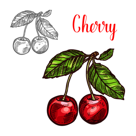 Cherry vector schets fruit berry pictogram Stock Illustratie