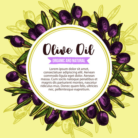 Vector olive oil product olives sketch poster illustration. Иллюстрация
