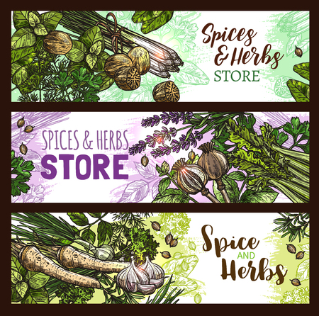 Spices and herbs farm store vector banners illustration.