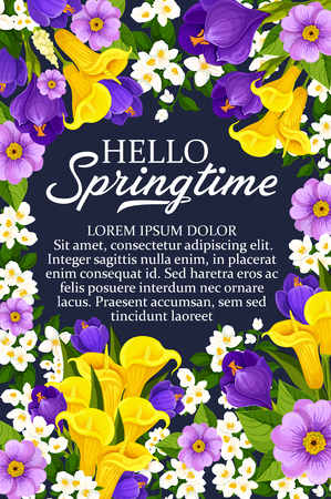Hello Springtime wishes poster of daffodils, tulips and crocuses bouquet and seasonal spring quotes. Vector floral design of springtime snowdrops, crocuses or violets and tulips flowers
