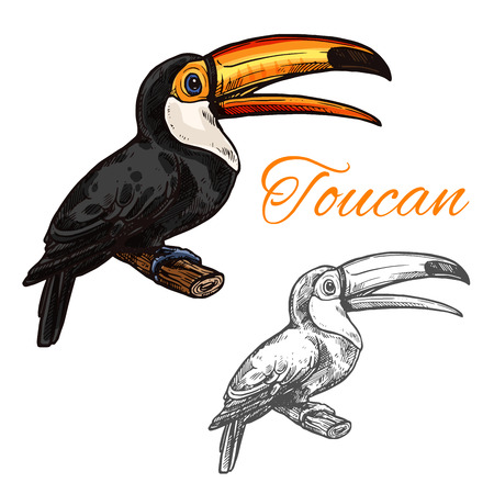 Toucan vector sketch wild exotic bird icon