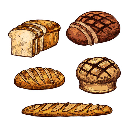 Vector sketch of bread colored icons set Çizim
