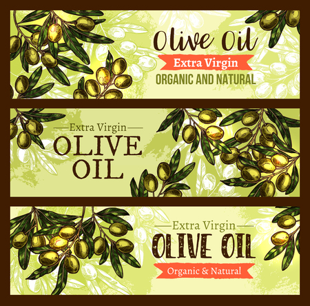 A Vector olive oil product olives sketch banners
