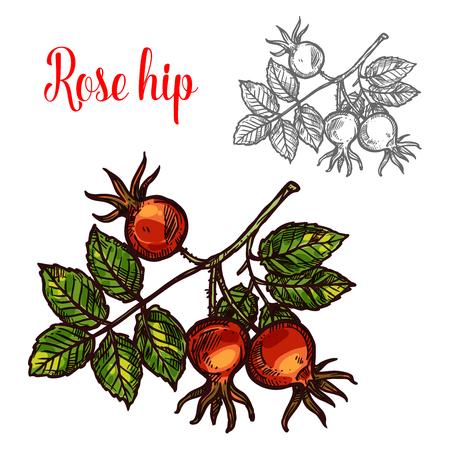 Rose hip vector sketch berry icon