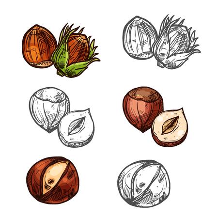 Hazelnut nuts vector sketch icons set Stok Fotoğraf - 97693722