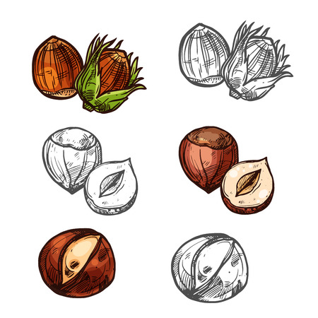 Hazelnut nuts vector sketch icons set