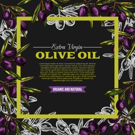 Vector olive oil sketch poster