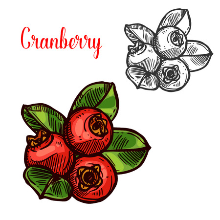 Cranberry vector sketch icon set