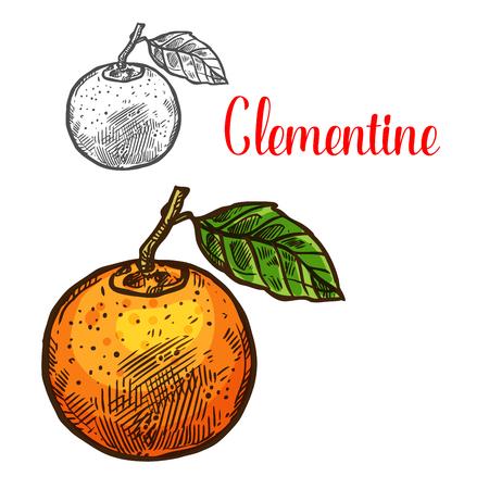 Clementine vector sketch citrus fruit cut icon