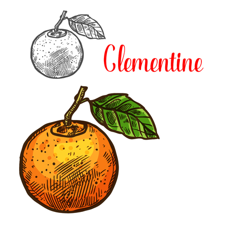 Clementine vector sketch citrus fruit cut icon