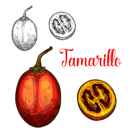 Tamarillo vector sketch icon set