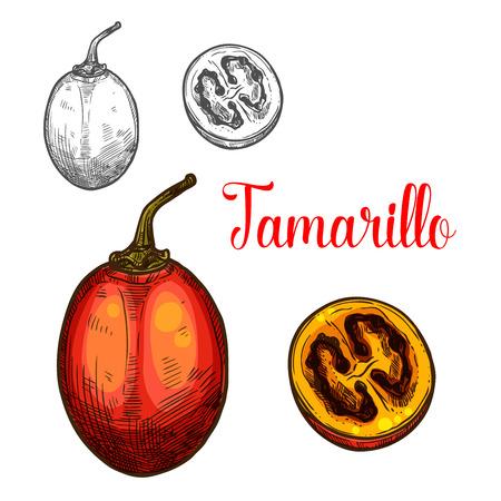 Tamarillo vector sketch icon set