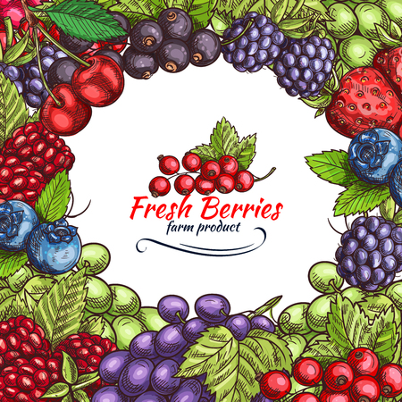 Vector natural berries sketch poster