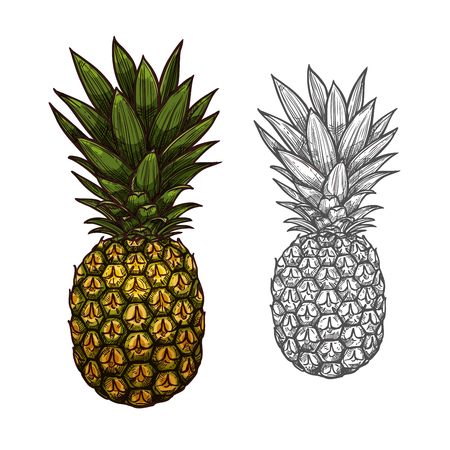 Pineapple tropical fruit sketch for food design Ilustração