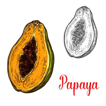 Papaya fruit sketch of exotic tropical berry Çizim