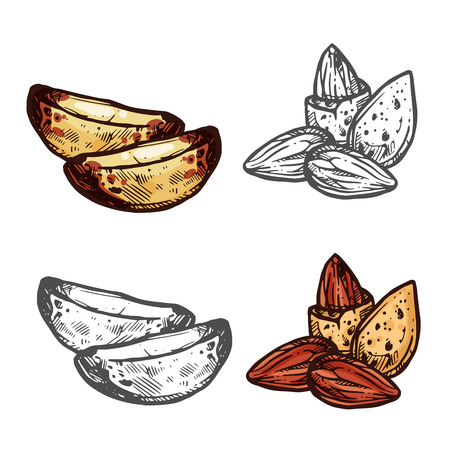 Almond and Brazil nut sketch for superfood design Stock Illustratie