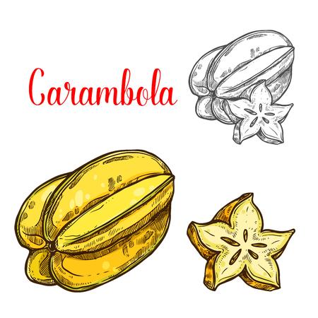 エキゾチックなトロピカルスターフルーツのカランボラフルーツスケッチ。フルーティーな飲み物、ジュース、デザート成分、健康的なダイエット  イラスト・ベクター素材