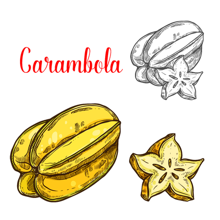 Carambola fruit sketch of exotic tropical starfruit. Yellow juicy carambola isolated icon for fruity drink, juice and dessert ingredient or healthy dieting and vegetarian food themes design