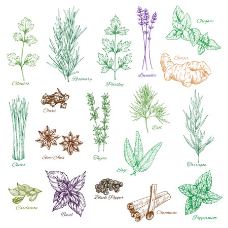 Vector icons set of spices and herbs seasonings