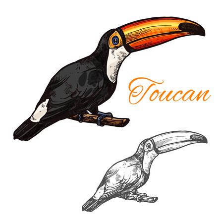Toucan vector sketch exotic bird icon