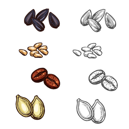 Nuts beans and seeds vector sketch icons