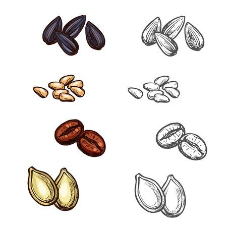haricots de noix et des graines vecteur croquis icônes Vecteurs