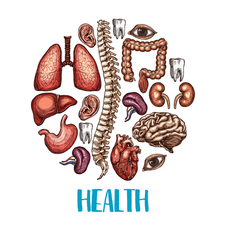 Health poster of human body organs. Vector color sketch design of heart, brain or lungs and kidney or bladder organ, eye, tooth or esophagus and spleen icon for medical concept or therapy hospital