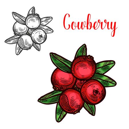 Cowberry vector sketch fruit berry icon Иллюстрация