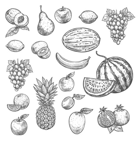 Vector sketch fruits isolated icons Фото со стока - 100029616
