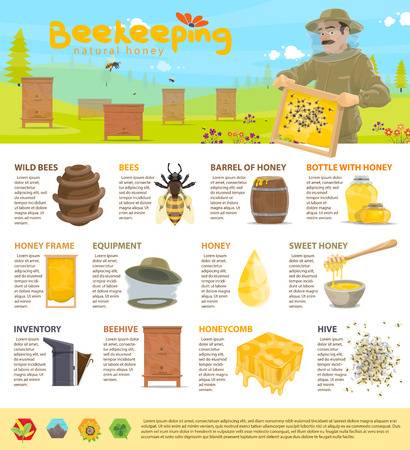 Honey beekeeping vector infographics Illustration