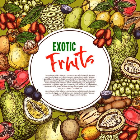 Vector fruit sketch poster exotic fruits