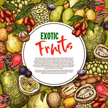 Vector fruit sketch poster exotic fruits