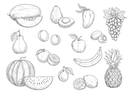 Fruit isolated sketches. Apple, orange, banana, lemon, pear and peach, grape, pineapple, kiwi and mango, watermelon, avocado and plum, melon and apricot fruit for organic food and juice design Illusztráció