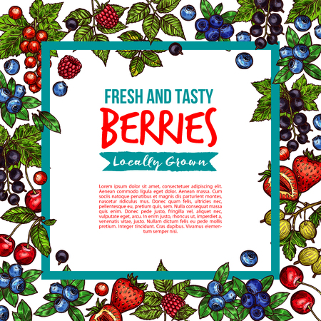 Berries and berry fruits sketch poster of fresh forest or garden and farm grown organic berry harvest. Vector blueberry, strawberry, raspberry, gooseberry or red currant and blackcurrant Ilustrace