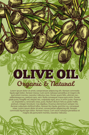 Green olives sketch poster for olive oil organic natural product. Vector design template of green olive fruits and leaves for olive oil extra virgin product or Italian or Spanish cuisine