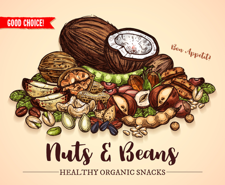Nuts, beans and fruit seeds mix sketch poster. Vector design of peanut or coconut nut and hazelnut, pistachio or almond walnut and legume bean, macadamia or filbert nut and pumpkin or sunflower seeds Illustration